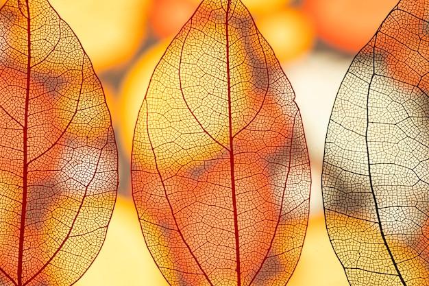 Abstracte transparante oranje herfstbladeren