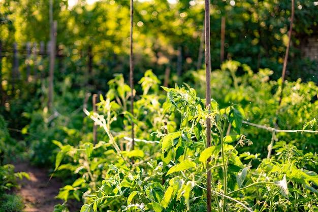 Abstracte tuinachtergrond onder de de zomerzonneschijn