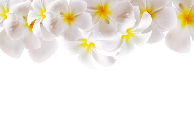 Abstracte witte bloem met ruimte