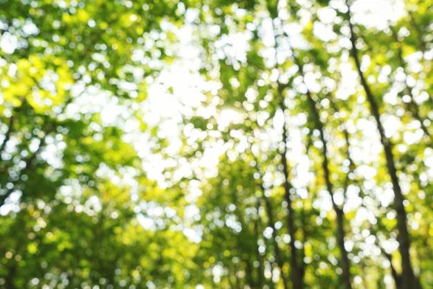 Abstracte zomerbladeren achtergrond