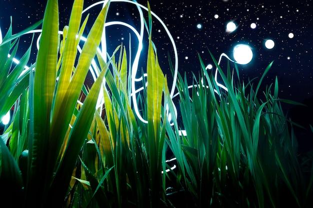 Abstractie: bolbliksem zweeft in hoog groen gras tegen de achtergrond van de nachtelijke sterrenhemel.