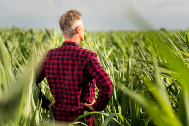 Achteraanzicht man op zoek weg in een veld