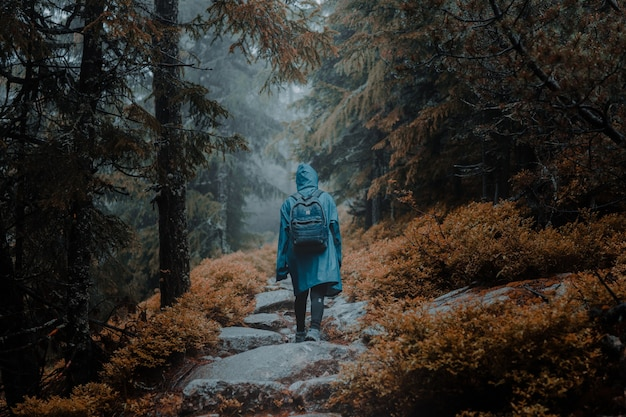 Achteraanzicht van een backpacker in een regenjas die op een rotsachtig pad in een herfstbos loopt