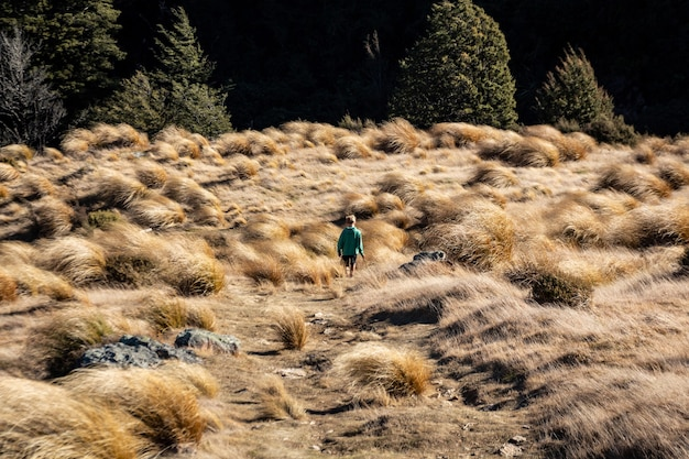 Achteraanzicht van een jonge jongen die in het schilderachtige grasland waadt