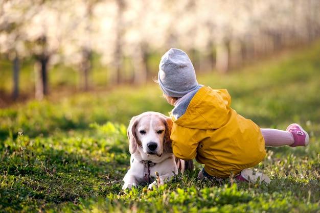 Achteraanzicht van een klein peutermeisje met een hond in de boomgaard in het voorjaar, spelend.