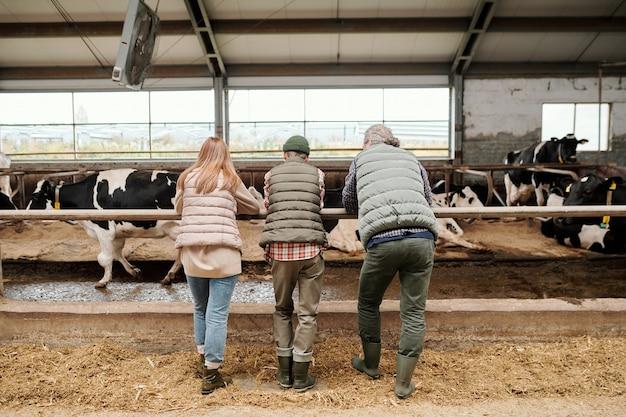 Achteraanzicht van familie van vader, moeder en tienerzoon in werkkleding bukkend over grote paddock met vee voor de camera