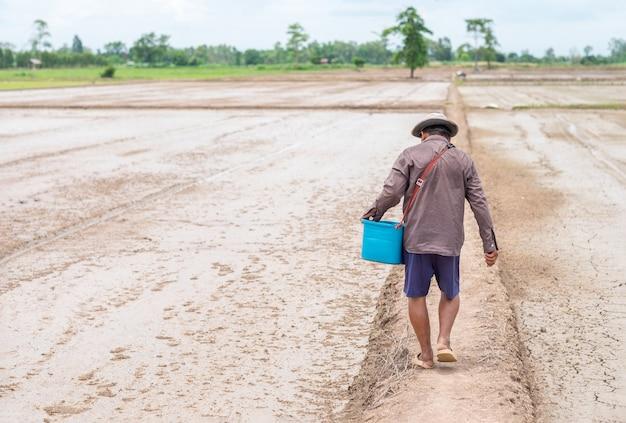 Achteraanzicht van oude boer met blauwe emmer wandelen op rijstboerderij