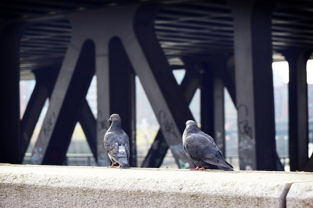 Achteraanzicht van twee grijze duiven op de muur