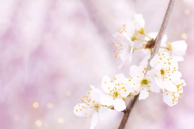 Achtergrond die van de lente op een zonnige dag bloeit.