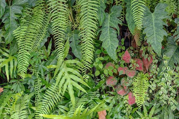Achtergrond groene bladbladeren en rode kleur