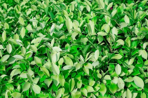 Achtergrond groene bladeren van een plant, plaats voor tekst