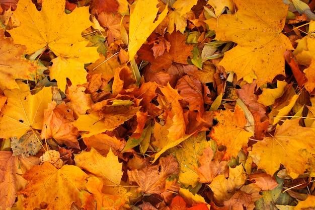 Achtergrond groep herfst oranje bladeren. herfst concepten