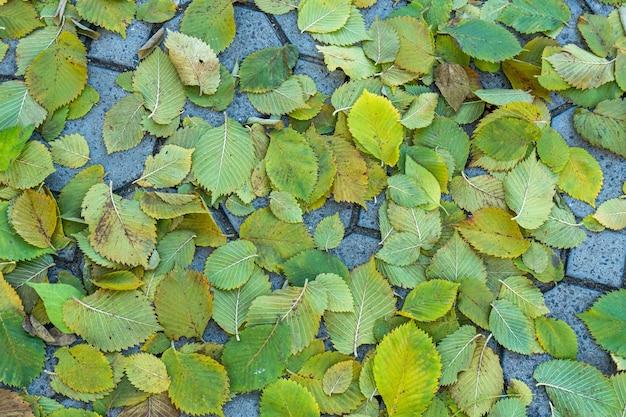 Achtergrond groep herfst oranje bladeren.