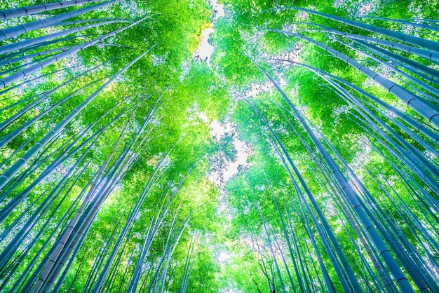 Achtergrond hek boom bamboe natuurlijke