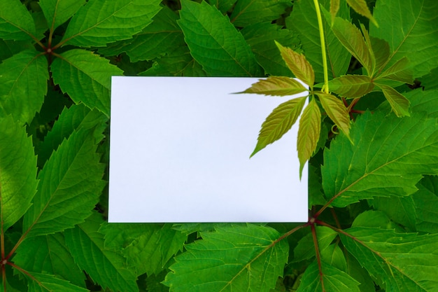 Achtergrond met bladeren en wit frame.