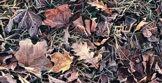 Achtergrond met herfst bevroren bladeren