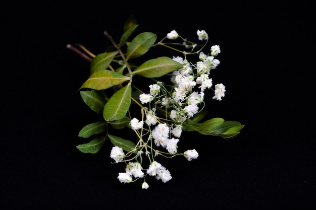 Achtergrond met kleine witte bloemen (gypsophila paniculata), wazig, selectieve aandacht