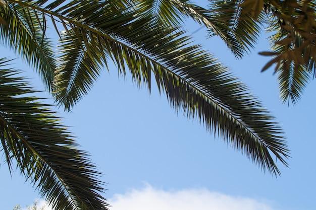 Achtergrond met kopie ruimte voor tekst van palmbomen op blauwe lucht en witte wolken