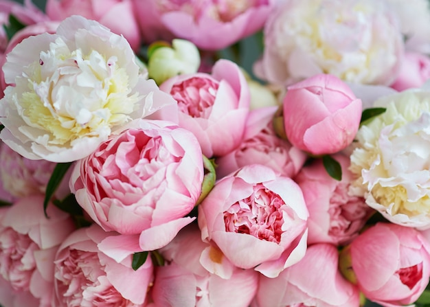 Achtergrond met mooie witte en roze bloemen pioenrozen.