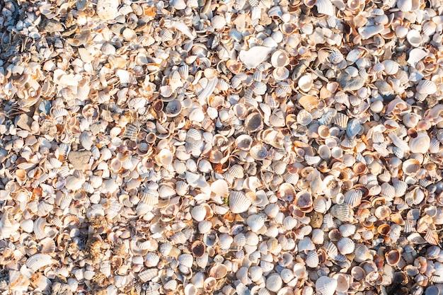 Achtergrond met prachtige schelpen op een zonnige dag. bovenaanzicht, plat gelegd.