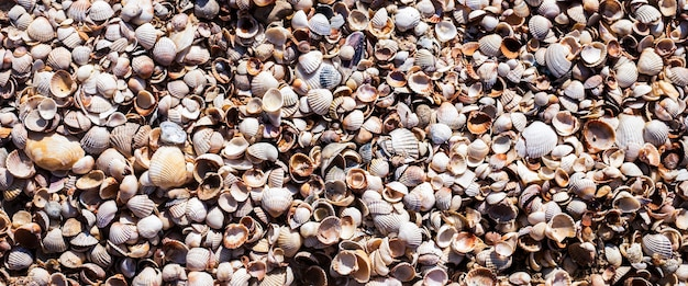 Achtergrond met prachtige schelpen op het strand. bovenaanzicht, plat gelegd. banier.