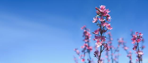 Achtergrond met roze bloesem. prachtige natuurscène met bloeiende boomtak en blauwe hemel.