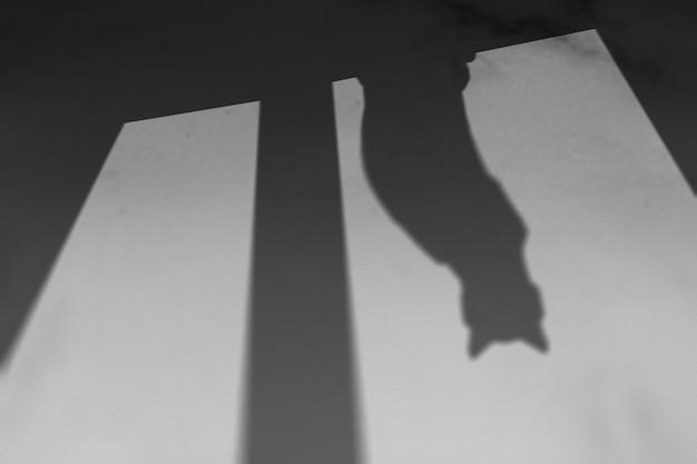 Achtergrond met schaduw van kat zittend op een raam
