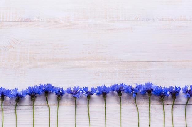 Achtergrond met verse korenbloemen