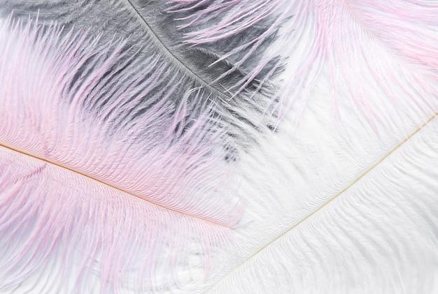 Achtergrond met zachte kleurrijke veren op wit