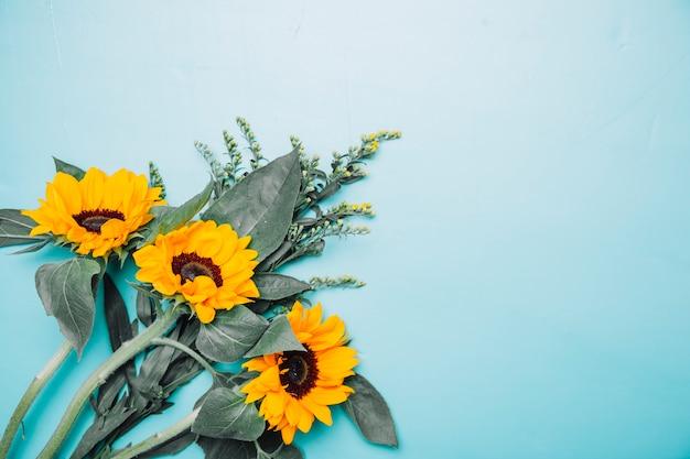 Achtergrond met zonnebloemen