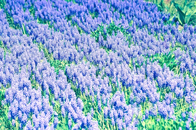 Achtergrond paarse bloemen groeien diagonale lijnfilter, getint