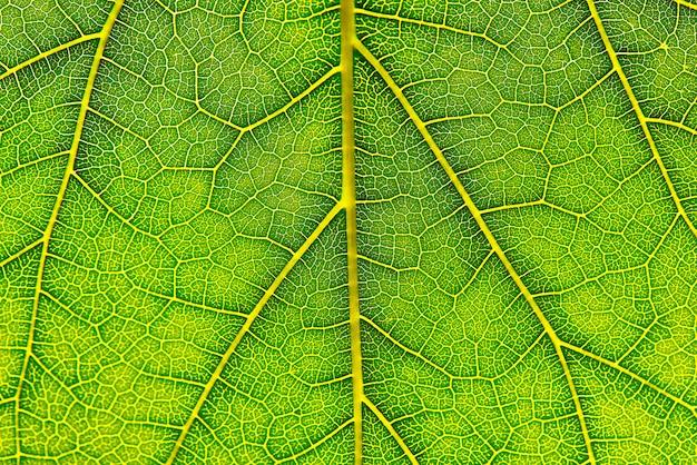 Achtergrond textuur van groen blad macrofotografie van groen blad