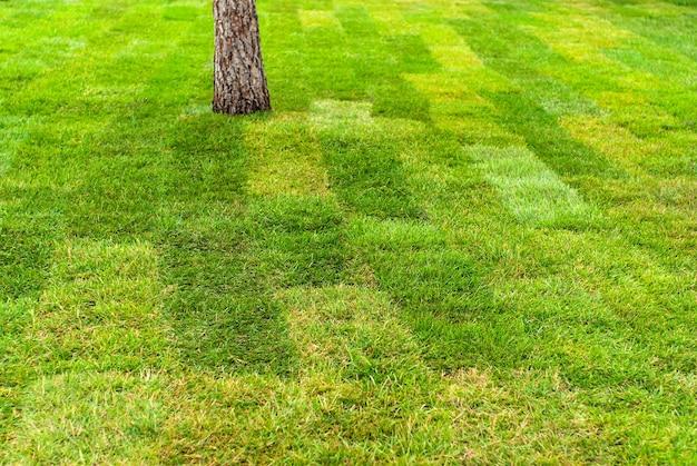 Achtergrond, textuur - vers gelegd gazon van gerold gras