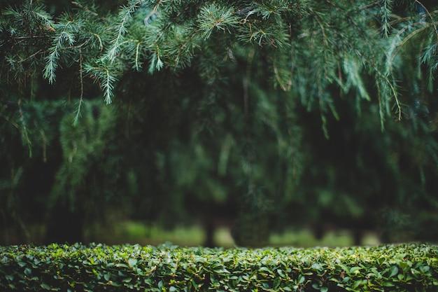 Achtergrond van bladeren en bomen in groen bos, voor productvertoning