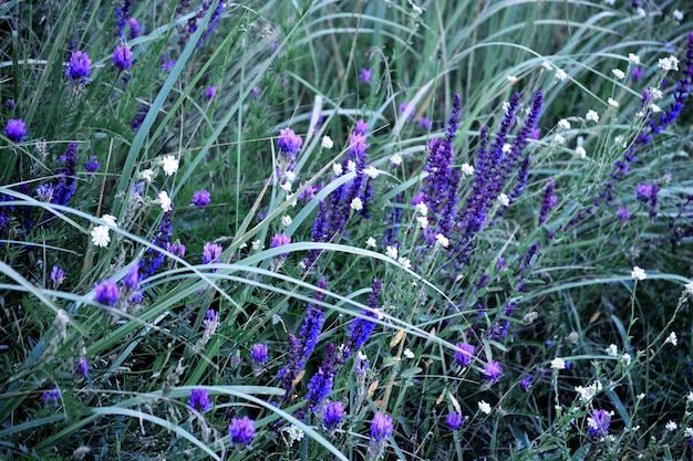 Achtergrond van bloemen en groen gras, filter