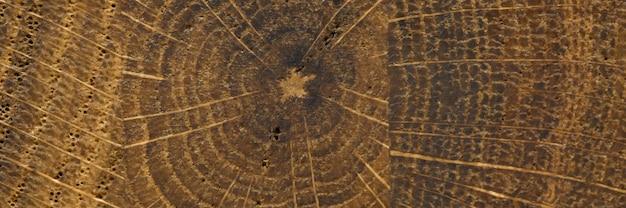 Achtergrond van de abctract de houten texure close-up