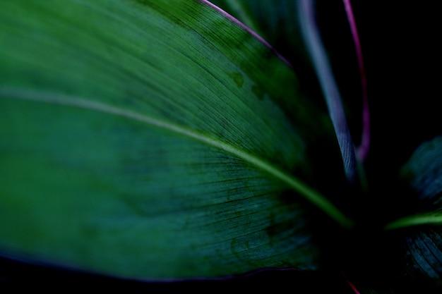 Achtergrond van de bladeren de abstracte textuur, sluit omhoog patroon
