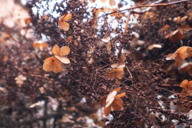 Achtergrond van de droge bloemen van vorig jaar in delicate bruine tinten