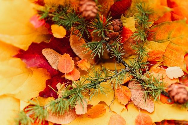 Achtergrond van een boeket van rode en gele droge herfst esdoorn bladeren op elkaar gestapeld, bovenop hen zijn kastanjes, esdoorn zaden en een takje lariks met kegels. val concept