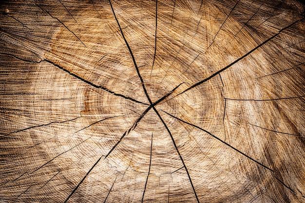 Achtergrond van een houten stomp
