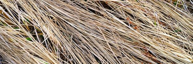 Achtergrond van een oud droog stro verdorde hoop gras.