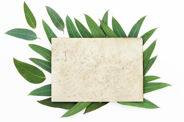 Achtergrond van eucalyptusbladeren op het grijze oppervlak en plaats voor tekst in het midden