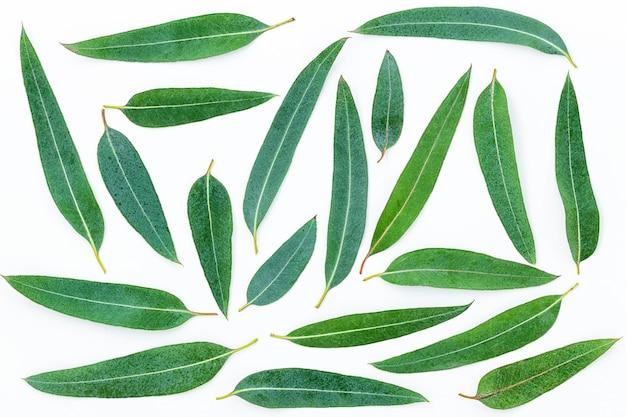 Achtergrond van eucalyptusbladeren op het grijze oppervlak