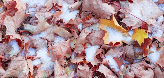 Achtergrond van gele herfstbladeren in sneeuw