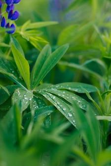 Achtergrond van groen blad