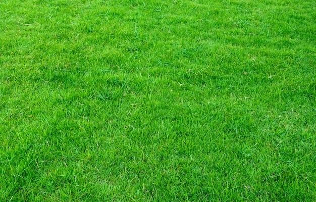 Achtergrond van groen grasgebied. groen graspatroon en textuur. groen gazon voor achtergrond.