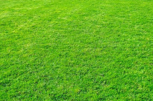Achtergrond van groen grasgebied. groen graspatroon en textuur.