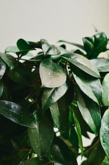 Achtergrond van groene bladeren.