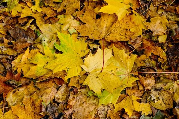 Achtergrond van groep gele herfst oranje bladeren.