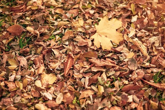 Achtergrond van herfst gele en oranje droge bladeren die op de grond liggen.